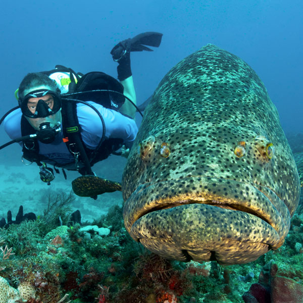 2018-03-02-tropic-scuba-ed-grouper-dive-scuba-instructor-sq-crop-600px.jpg
