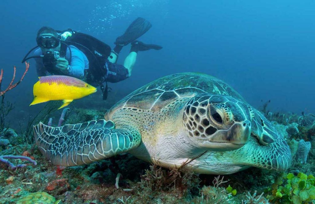 2018-05-11-tropic-scuba-ed-del-campo-dive-scuba-instruction-tours-guide-turtle-crop-biscayne-national-park-miami-fl-austins-dive-page-no-logo-1100x713px-mq.jpg