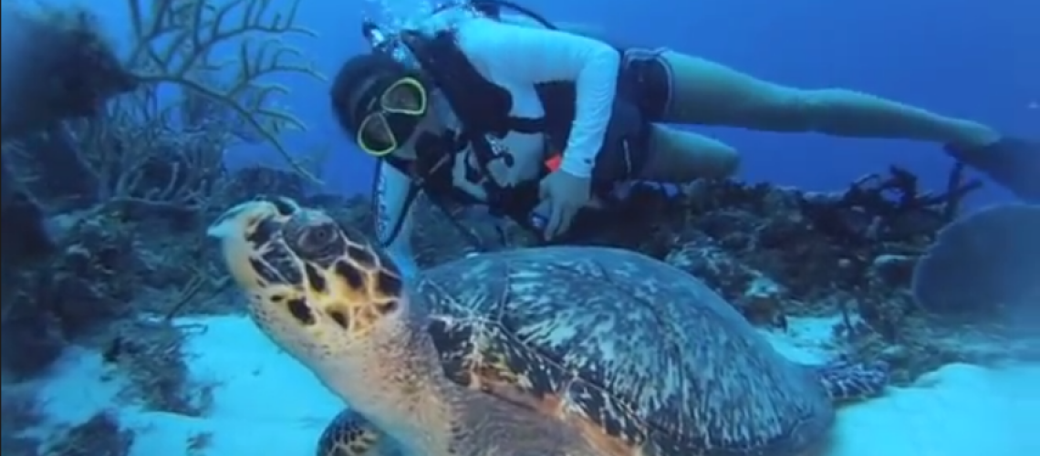 picture of turtle and diver in Cozumel during Advanced Scuba Dive class with Tropic Scuba